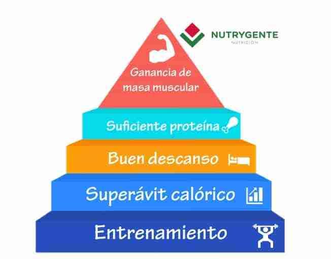 Ilustración sobre la ganancia de masa muscular