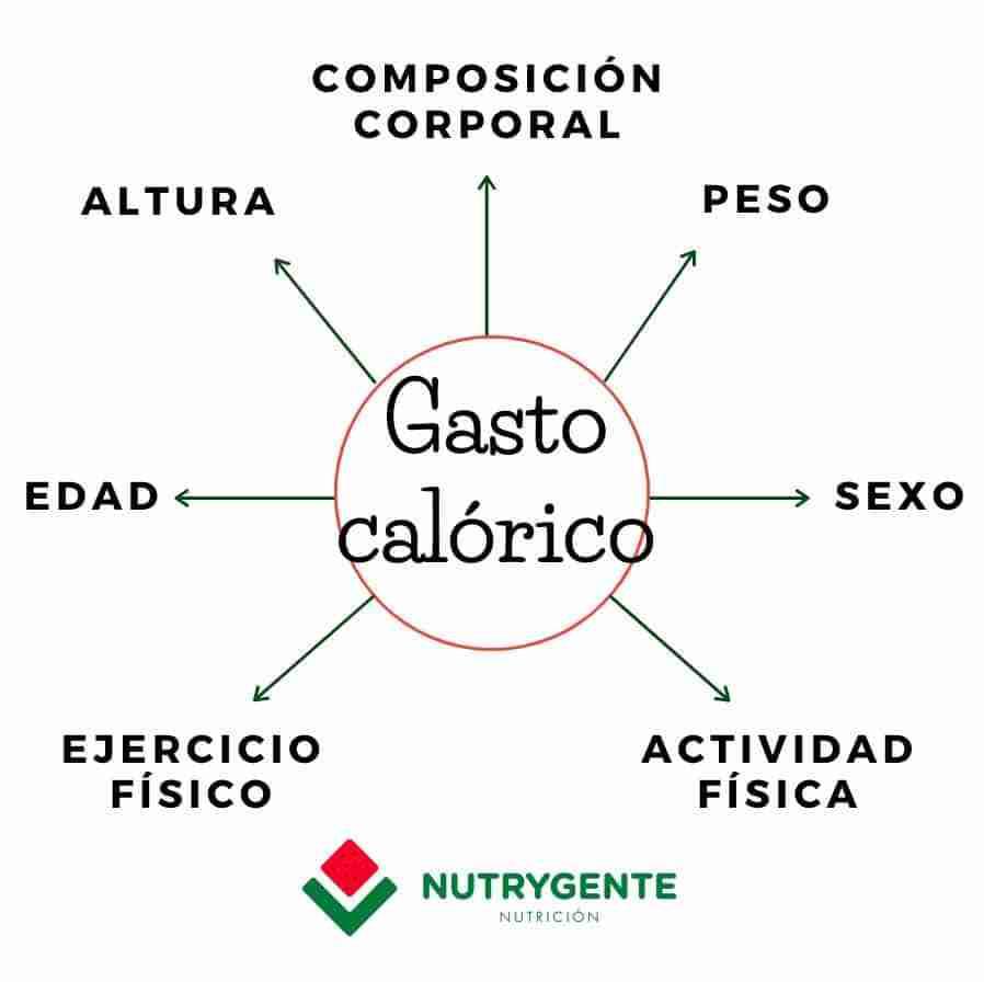 Ilustración de los factores que influyen en el gasto calórico en nutrición